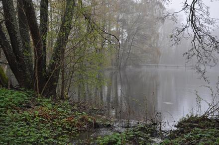 Metsälampi Vallisaaressa sisäosissa, parin kilometrin päässä Kauppatorilta. Kuva© Matti Niiranen.
